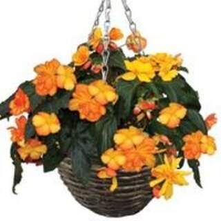 14 Summer Baskets