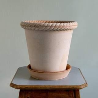 Emilia Rose, 16 cm, Pot