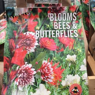 Blooms Bees Butterflies Red