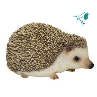 PP Pygmy Hedgehog F