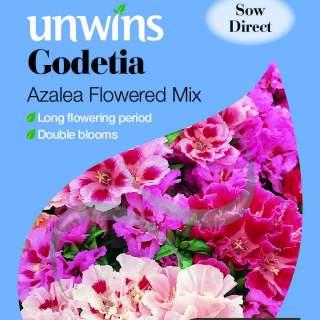 Godetia Azalea Flowered Mix
