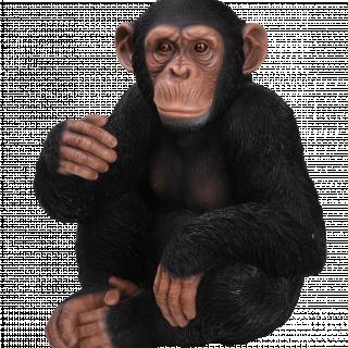 RL Sitting Chimpanzee D x 1