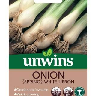 Onion Spring White Lisbon