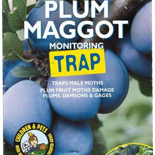 GS Plum Maggot Monitoring Trap