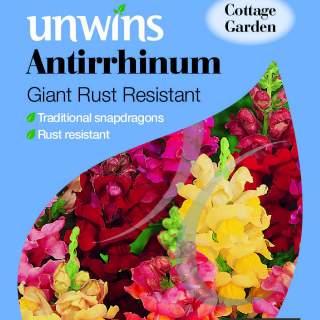 Antirrhinum Giant Rust Resistant