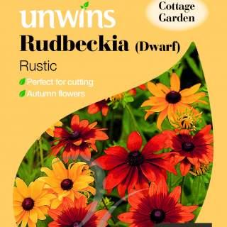 Rudbeckia Dwarf Rustic