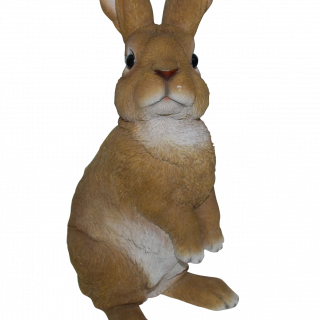 RL Lookout Rabbit C