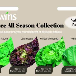 Lettuce All Season Collection
