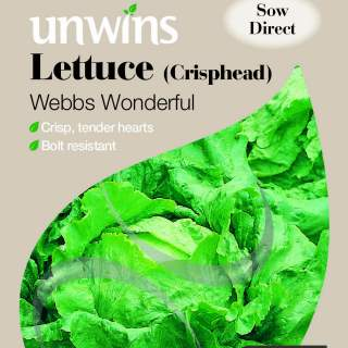 Lettuce (Crisphead) Webbs Wonderful