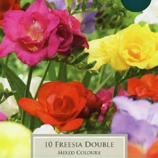 FREESIAS DOUBLE