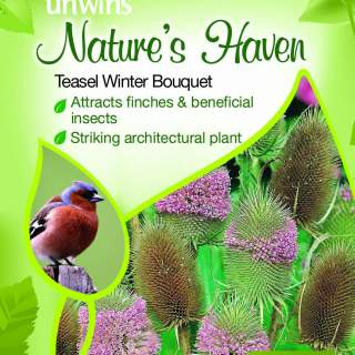 NH Teasel Winter Bouquet