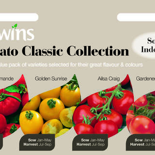 Tomato Classic Collection