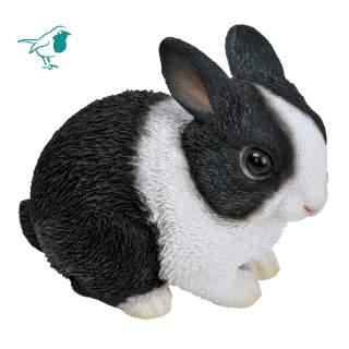 Baby Dutch Rabbit F