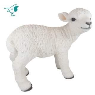 Real Life Lamb D