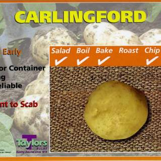 Carlingford Seed Potatoes 2kg