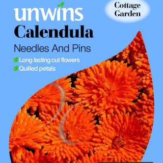 Calendula Needles And Pins