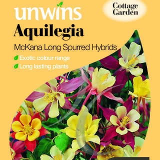 Aquilegia Mckana Long Spurred Hybrids