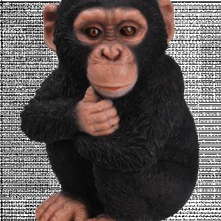 RL Baby Chimpanzee F