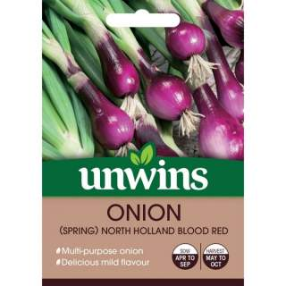Onion Holland Blood Red