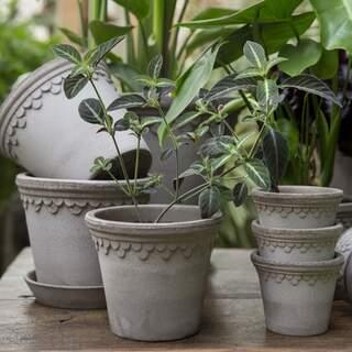 Copenhagener Grey, 10 cm, Pot