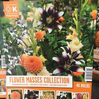 Flower Masses Collection