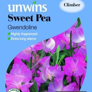 Sweet Pea Gwendoline