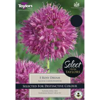 ALLIUM CAROLINIANUM ROSY DREAM SEL