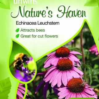 NH Echinacea Leuchstern