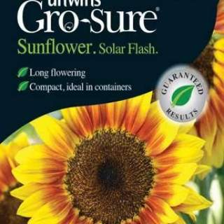 Sunflower Solar Flash F1