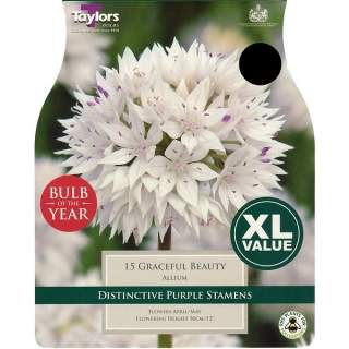 ALLIUM GRACEFUL BEAUTY 6+ XL