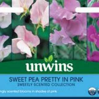 Sweet Pea Pretty in Pink