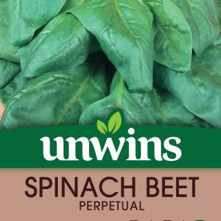 Spinach Beet Perpetual