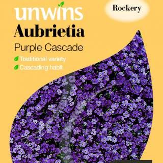 Aubrietia Purple Cascade