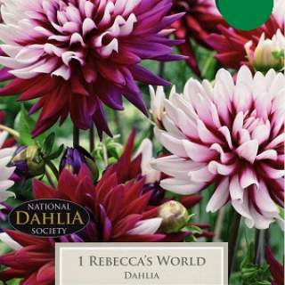 DAHLIA REBECCAS WORLD