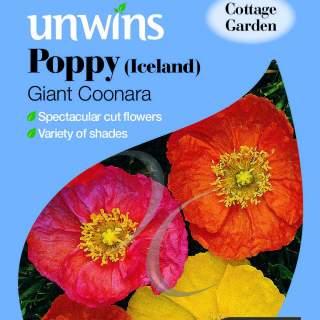 Poppy Iceland Giant Coonara