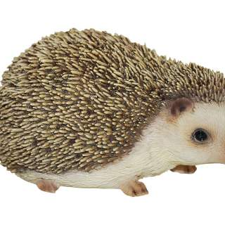 Real Life Hedgehog D