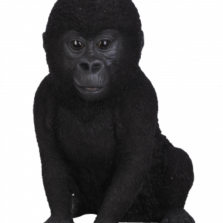 PP Baby Gorilla F