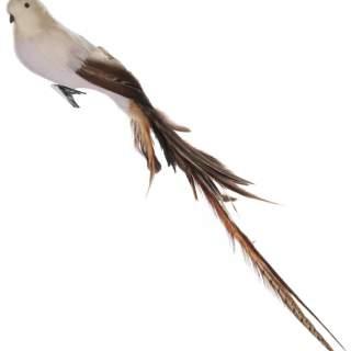 Feather bird beige brown tail 55cm