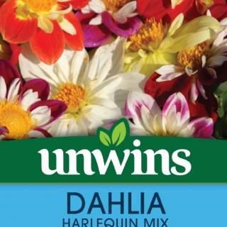 Dahlia Harlequin Mix