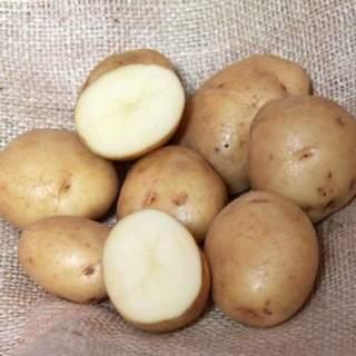 Seed Potato SARPO MIRA
