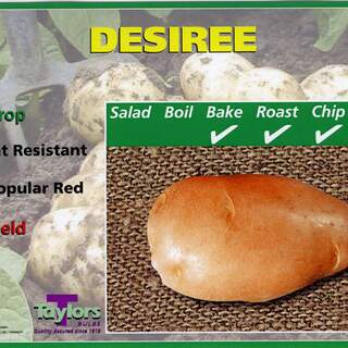 DESIREE SEED POTATOS