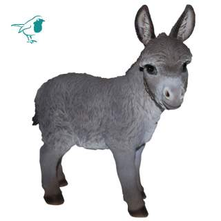 NF Donkey D