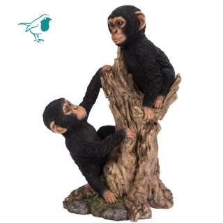 Climbing Baby Chimps B