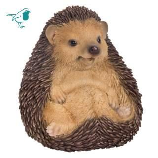 Sitting Baby Hedgehog F