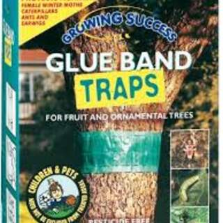 GS Glue Band Traps
