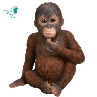 RL Baby Orangutan F