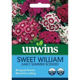 Sweet William Early Summer Scented