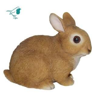 RL Baby Rabbits F
