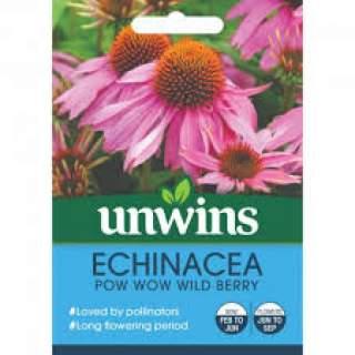 Echinacea Pow Wow Wild Berry