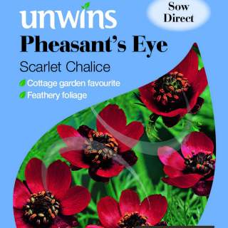 Pheasant s Eye Scarlet Chalice